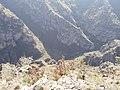 Armenia. Nature (2162322814).jpg