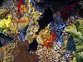 Assorted living corals.jpg