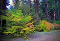 Aufderheide Drive Fall Color, Willamette National Forest (34047924824).jpg