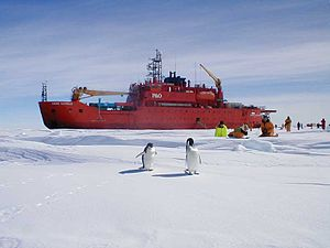 Aurora Australis (icebreaker) - Researchers from Aurora Australis observing a pair of penguins