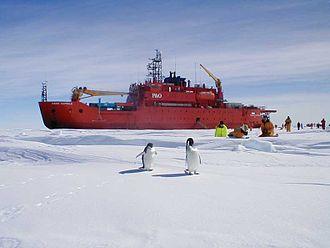 Aurora Australis (icebreaker) - Researchers from Aurora Australis observing a pair of penguins