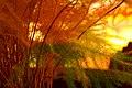 Autumn In Rasht Iran (49351160).jpeg