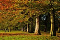 Autumn View in the Avenue of Tyne Green - panoramio - somaliayaswan (1).jpg