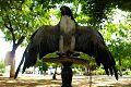 Aves en Venezuela 1.jpg