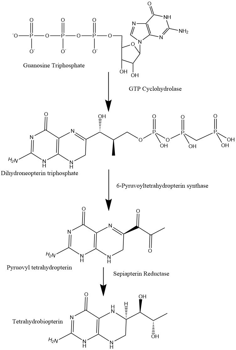 BH4 synthesis pathway