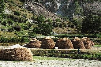 Bagrot Valley - Bagrote Valley Wheat Harvest Chirah