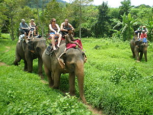 Ko Chang District - Elephant trekking, Ban Kwan