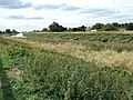 Bank of The River Nene near Wisbech - geograph.org.uk - 1505221.jpg