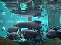 Barcelona Cosmocaixa Aquarium 05.jpg