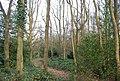 Barnet Gate Wood - geograph.org.uk - 2360814.jpg