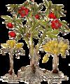 Basil-Besler-Hortus-Eystettensis-1613-pl362-hellebore-yellow-crocus.png