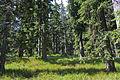 Bayerischer Wald - Falkenstein 001.jpg