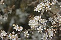 Bee - panoramio (3).jpg