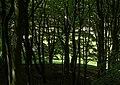 Beech hanger - geograph.org.uk - 1485329.jpg