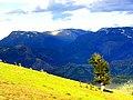Belpınarı belinin aşağısından - panoramio (1).jpg