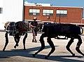 Big dog military robots.jpg