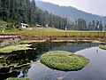 Bimal Nag Pond.jpg