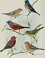 Bird-lore (1911) (14568910747).jpg
