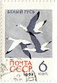 Bird Snow Goose 1962 stamp.jpg