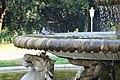 Bird bathing in Fontana dei cavalli marini, Villa Borghese (32618922248).jpg