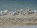 Birds-GulfCoastVisitorCenter-EvergladesNationalPark.JPG