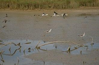Bitter Lake National Wildlife Refuge - Image: Bitter Lakes New Mexico