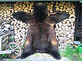 Black bear fur skin (2).jpg