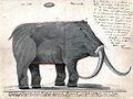 Boltunov mammoth.jpg