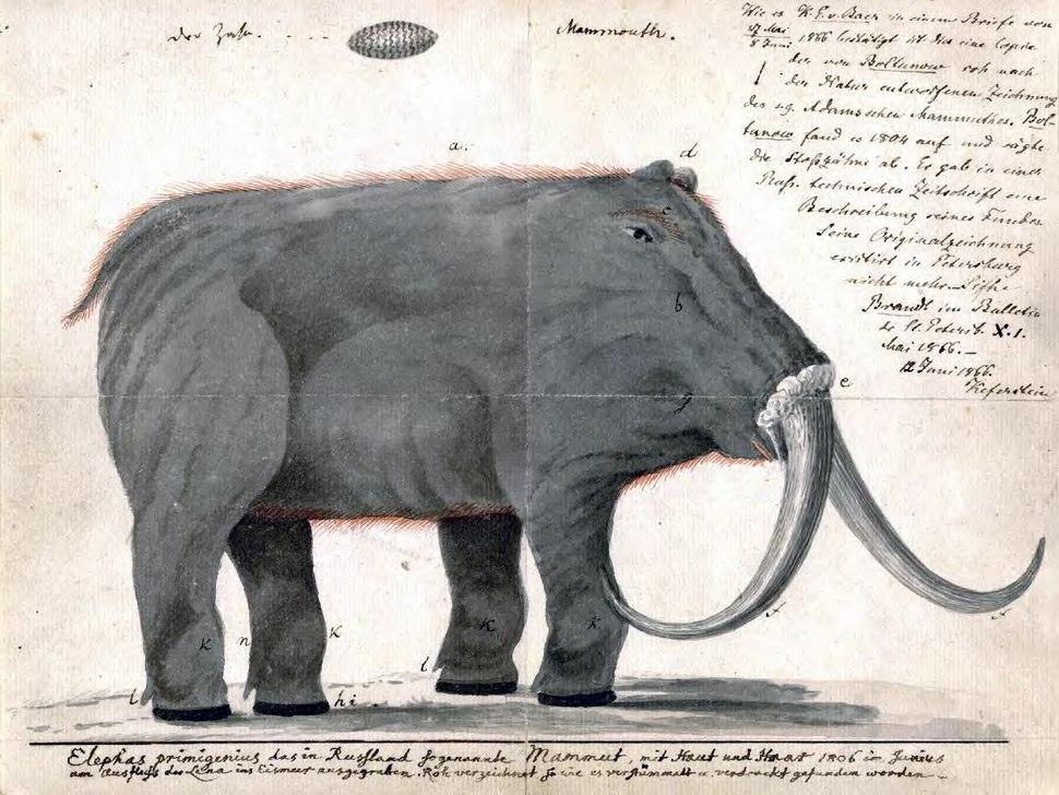 Boltunov mammoth