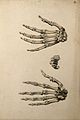 Bones of the hand; three figures. Ink and watercolour, 1830- Wellcome V0008212EL.jpg