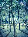 Bosque urbano (6988621346).jpg