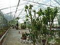 BotanicGardensPisa (106).JPG