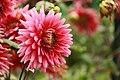 Botanic Garden (4994219142).jpg
