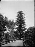 Botanic Gardens, Sydney (2484316839).jpg