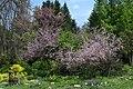 Botanical garden – spring 9155.jpg