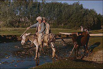 A Short Walk in the Hindu Kush - Boys on donkey, Afghanistan