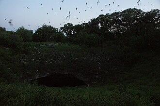 Bracken Cave - Image: Bracken Cave Bats dark