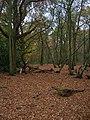 Bramble Grove - geograph.org.uk - 614433.jpg