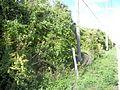 Brandon FL Moseley Homestead foliage02.jpg