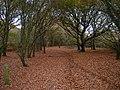 Bridleway, Milton Hide - geograph.org.uk - 614422.jpg