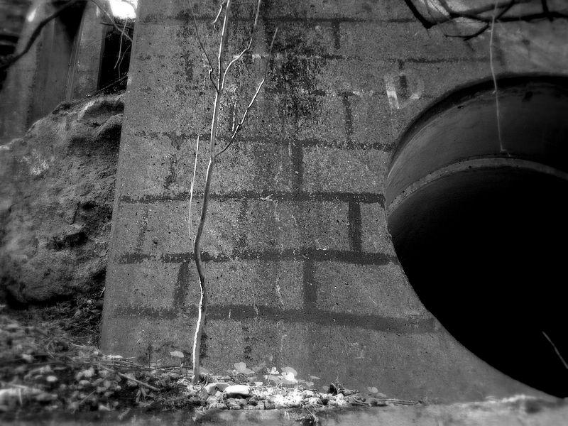 File:Brique fausse (12976817).jpg