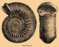 Brockhaus and Efron Encyclopedic Dictionary b2 652-1.jpg