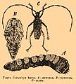 Brockhaus and Efron Encyclopedic Dictionary b68 948-0.jpg