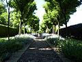 Buddleia avenue (5873844950).jpg