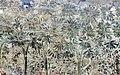 Buffalmacco, trionfo della morte, giardino 15 alberi.jpg