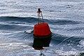 Buoy (37502839910).jpg