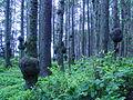 Burl Forest.jpg