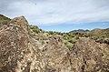 Butcher Jones Trail to Pinter's Point Loop, Tonto National Park, Saguaro Lake, Ft. McDowell, AZ - panoramio (56).jpg