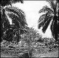 CH-NB - Belgisch-Kongo, Thysville (Mbanza Ngungu)- Landschaft - Annemarie Schwarzenbach - SLA-Schwarzenbach-A-5-26-019.jpg
