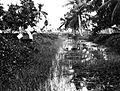 COLLECTIE TROPENMUSEUM Bestrijding van malaria; bestuiving van een kanaal met Parijs-groen, Java. TMnr 60013009.jpg